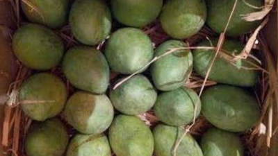 Farm Fresh Nuzvid Mangoes for sale